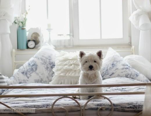 Westie-on-Bed