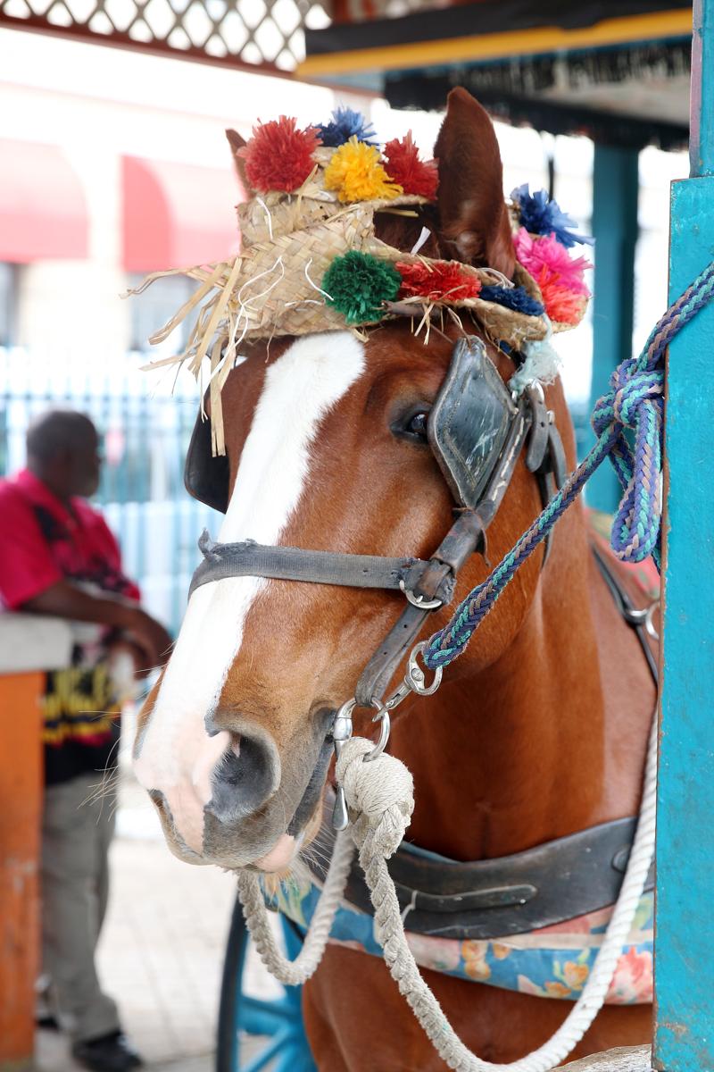 Horse Bahamas